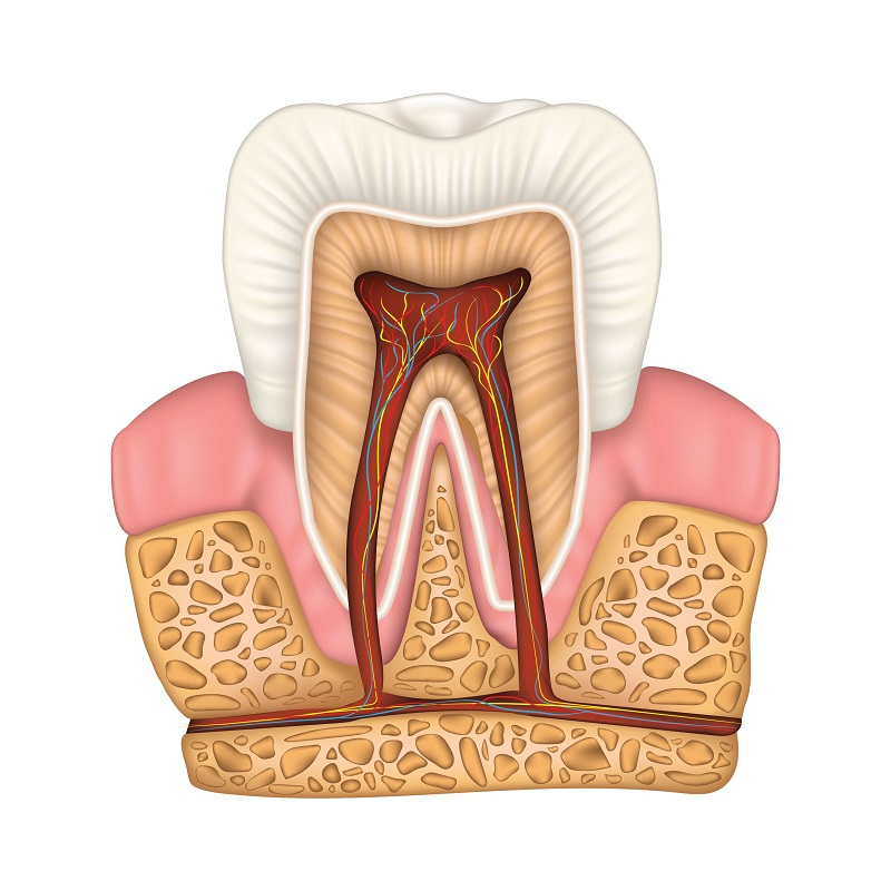 For treatment of root canals, Sonora dentist Jeff Berger is a top choice.